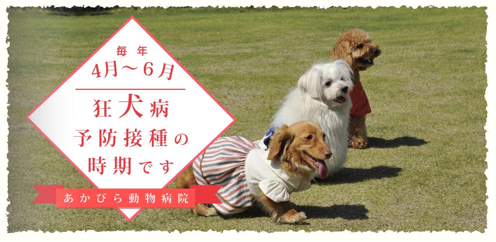 狂犬病予防接種の時期です