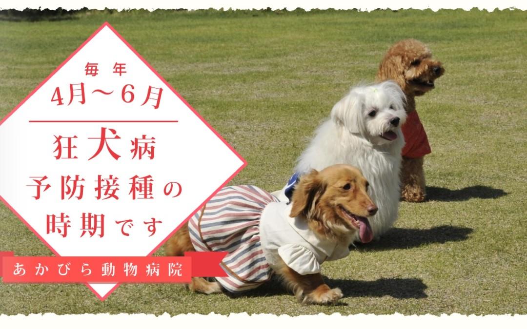 狂犬病予防接種の時期です。