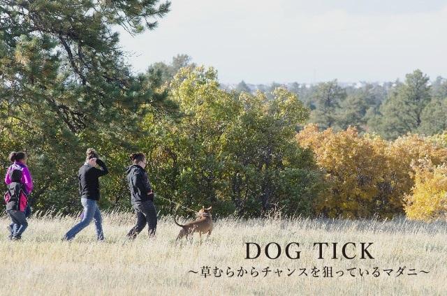散歩の秋、草むらから咬みつくチャンスを狙う「マダニ」にご用心!