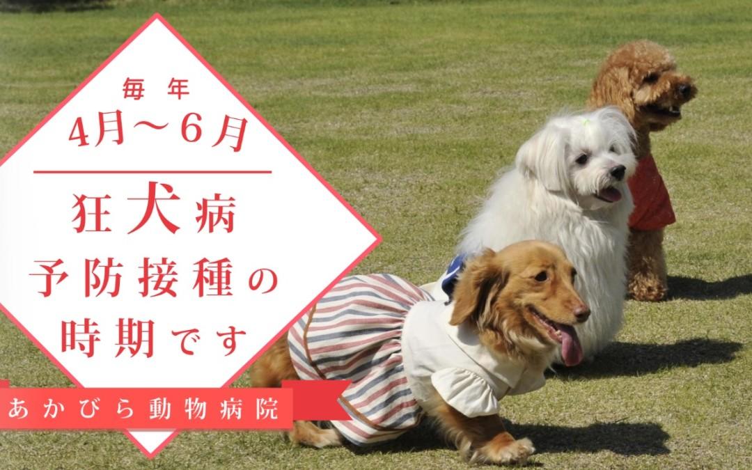 狂犬病予防接種のお知らせ